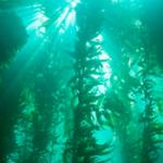 Seagreens 100% seaweed